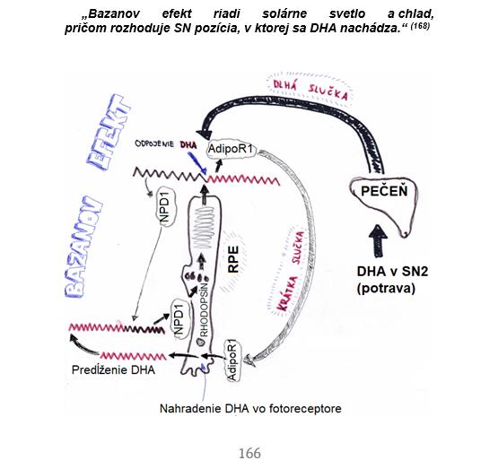 DHA jaroslav lachký bazanov efekt DHA