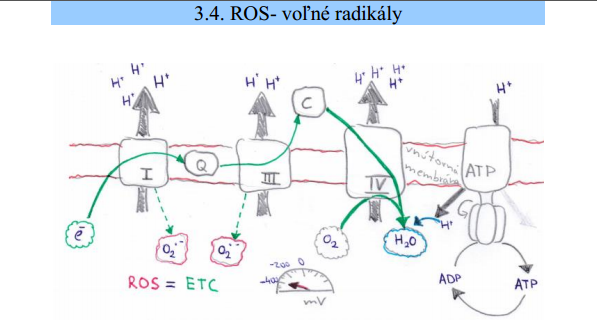 Jaroslav Lachký kniha cirkadiálna biológia voľné radikály ROS kvantová biológia svetlo voda magnetizmus