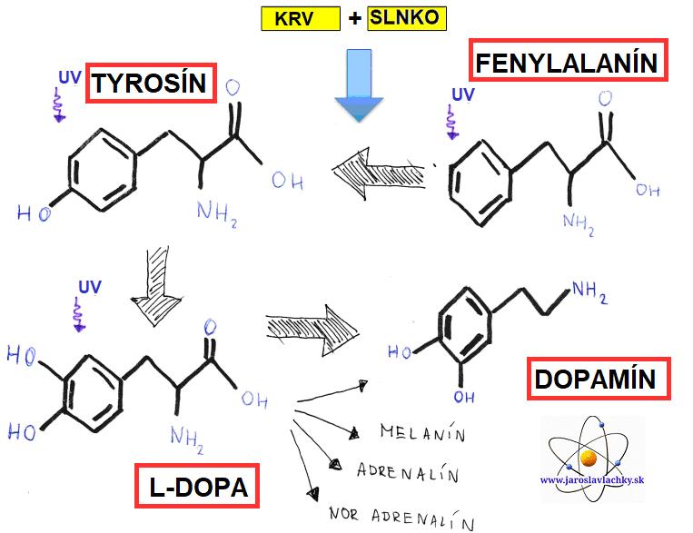 Jaroslav Lachký fenylalanín natyrozín naL-dopa