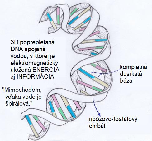 Jaroslav lachký DNA
