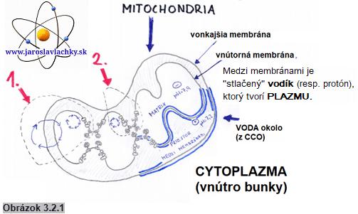 Mitochondria, pH avoda, jaroslav lachký, blog