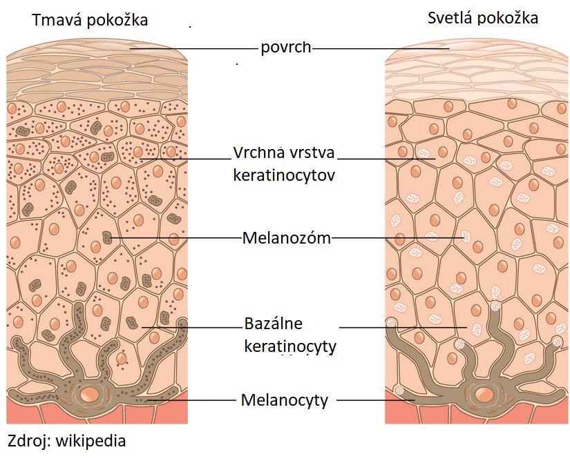 keratinocyty pokožka melasma jaroslav lachký