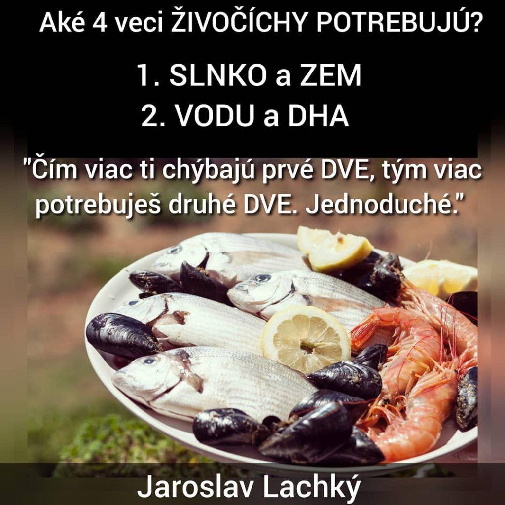 Jaroslav Lachký, DHA, grounding, voda aslnko