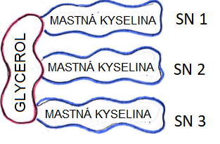 molekula TUKU, jaroslav lachký, blog, mitochondrie