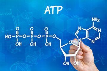 MITOCHONDRIE #6 ATP aATP-syntáza