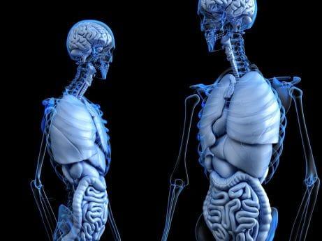 Črevo a mozog #2 Vírusy a priepustné črevo