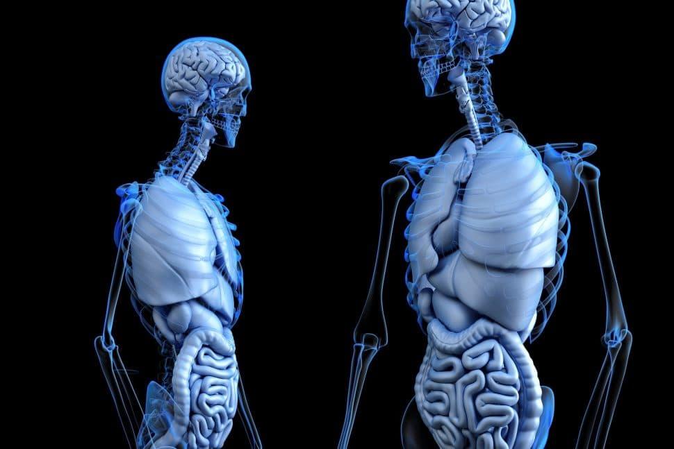 Črevo amozog #2 Vírusy apriepustné črevo